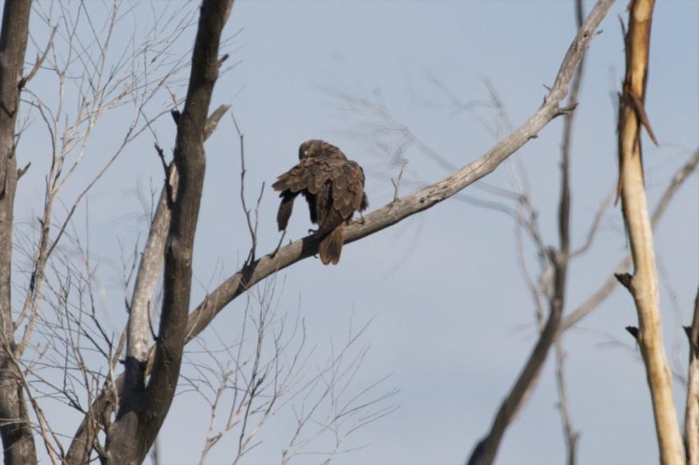 Black Falcon (2/6)