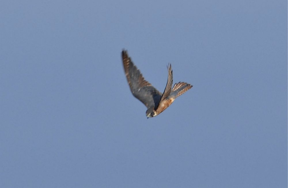Hobby at remarkable speed turn.