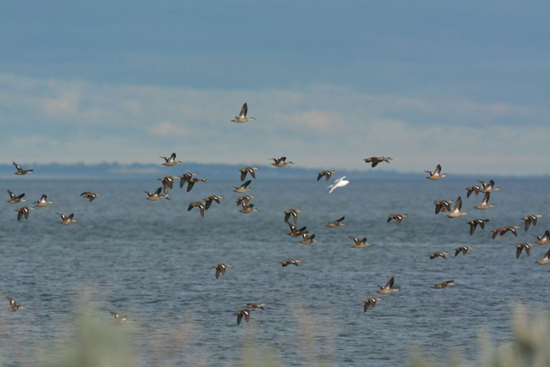 """Where's everyone going?  My birding knowledge didn't figure out they were 'out of here"""""""