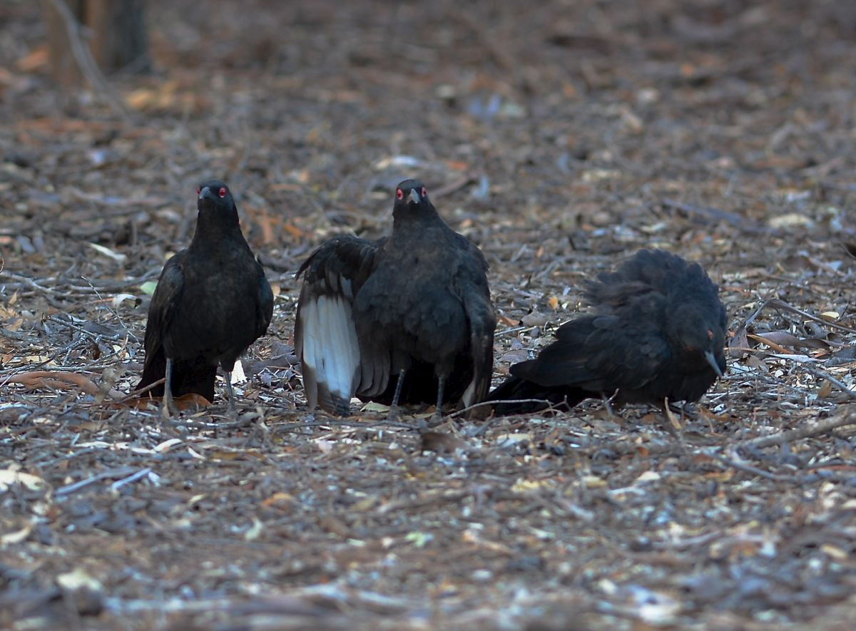 "The social committee. ""I hear by call this meeting of Choughedness to order."""