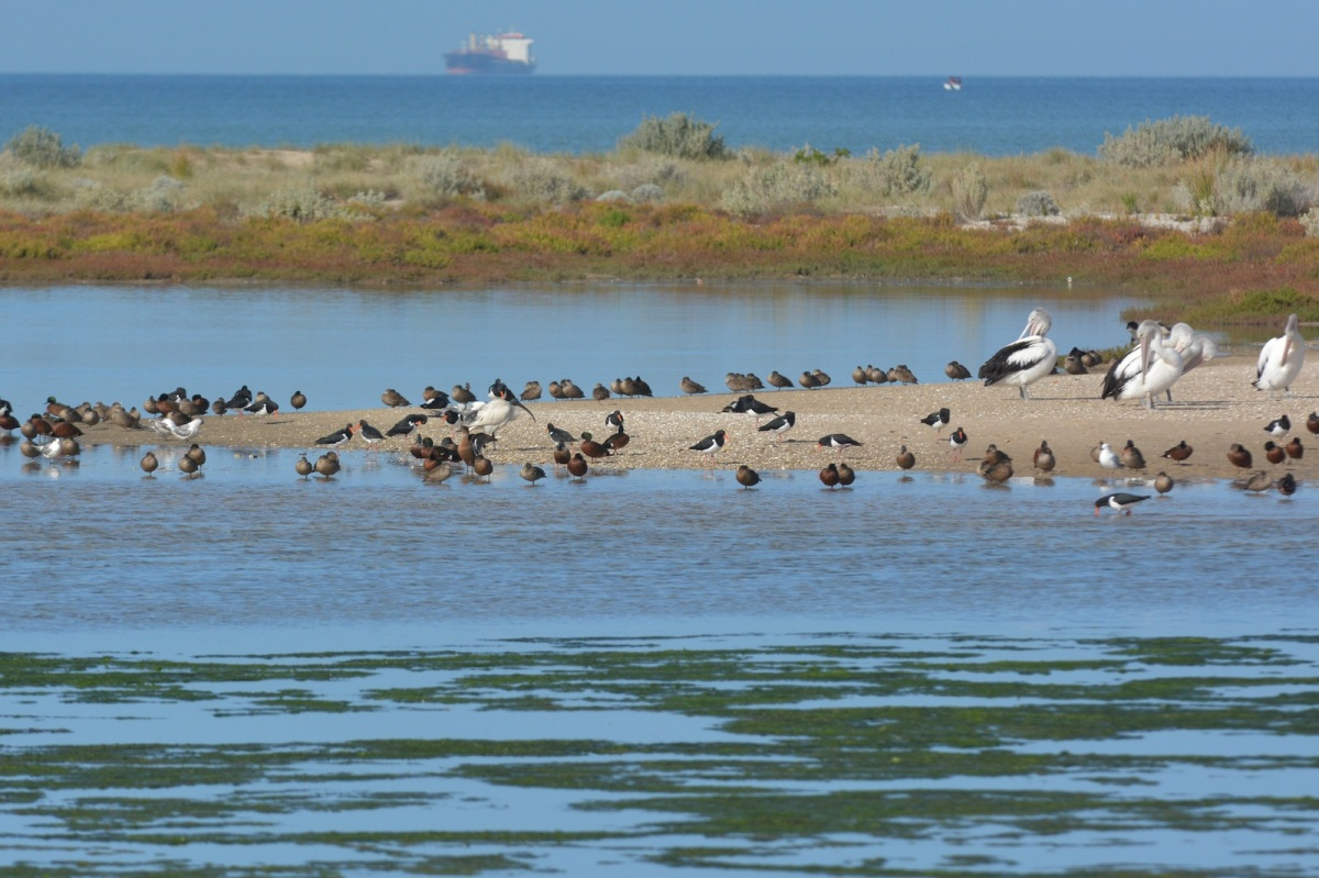 A collection of local inhabitants on the sands of the Laverton Creek outflow