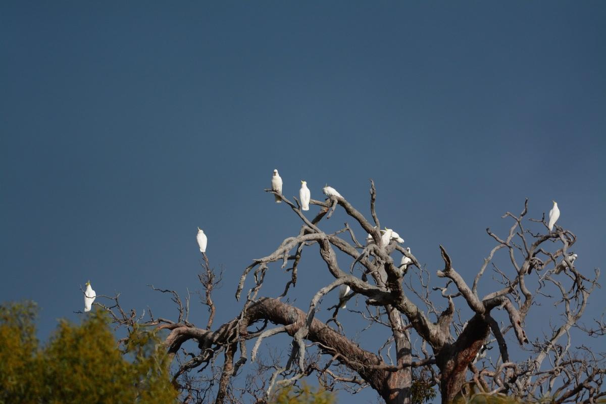 Many birds on many sticks