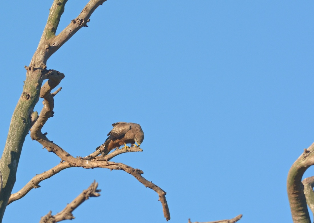 Female finishing a meal on the change over tree