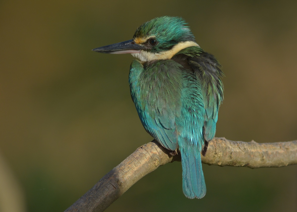 This is the female, as she has the more Emerald colours