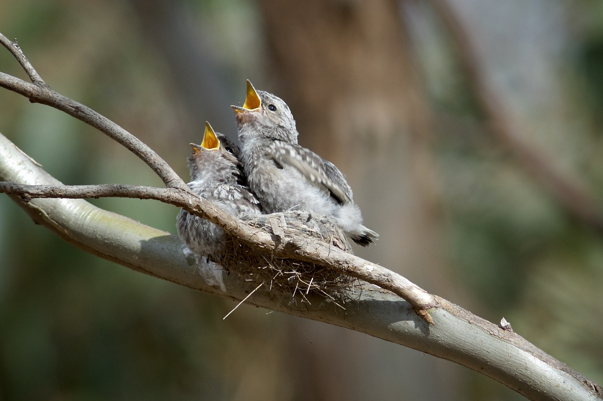 Well able to move about they show how small the nest really is.
