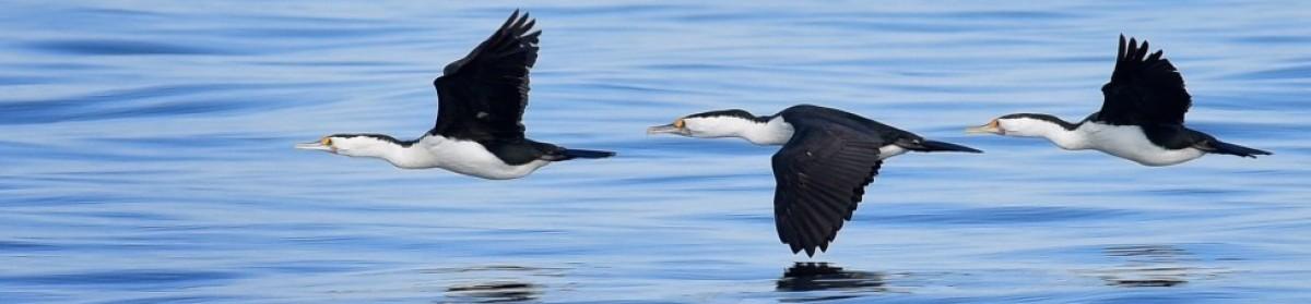 Birds as Poetry