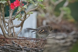 Penny the Garden Bird