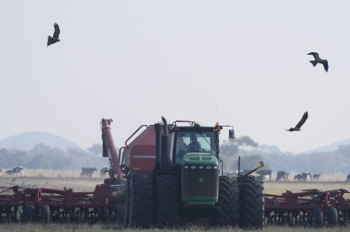 Every farmer with a tractor has black kites as his best mates.