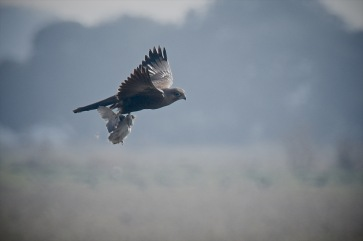 Gaining speed and height with every wing stroke, the bigger birds were being left behind