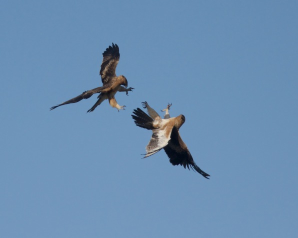 The lower bird has passed right by to take the underside position