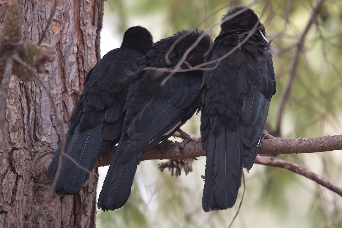 The family that preens together.