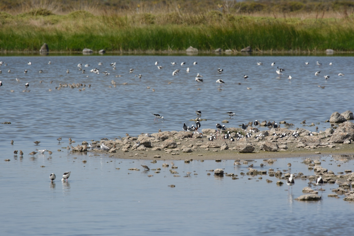 The amazing T Section ponds. Spot the Red Phalarope for extra points!