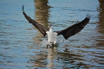 Open water, easy landing.
