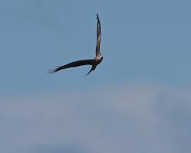 One kite, two kites many.