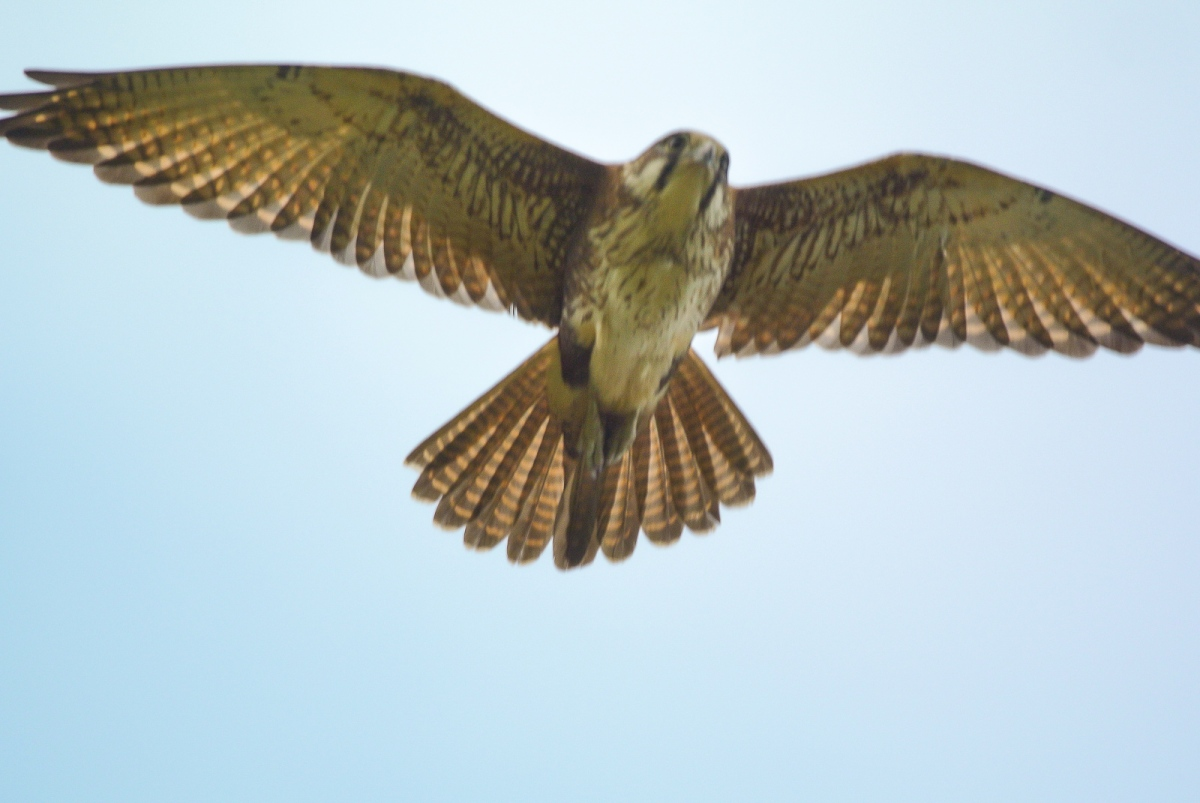 Hmm, not an inflight system. But at least I managed to get her in the viewfinder for about one frame.