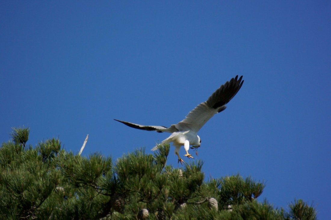 The nest is right on the top of the treeline.  Impossible to see from the ground.