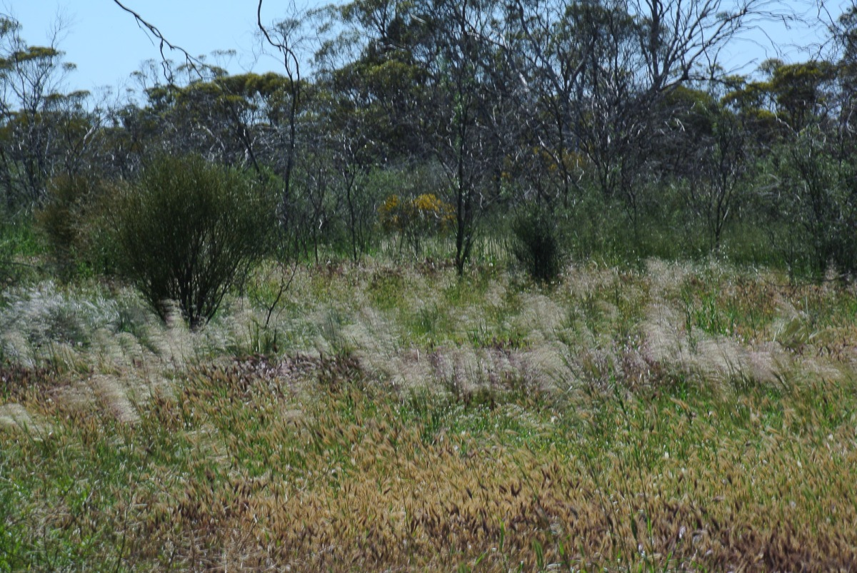 Rich variety of grasses and plants cover the ground.