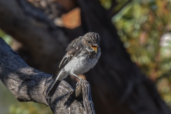 One of at least two fledglings they are now supporting