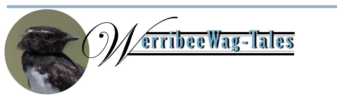 Werribee Wagtails Header